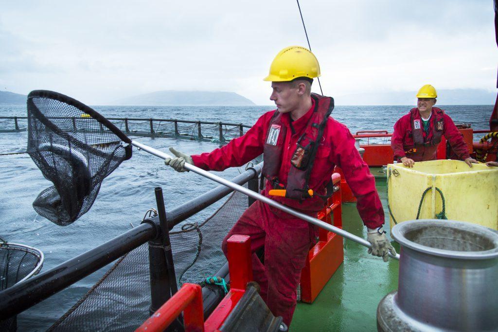 Ferninspektionen in der Fischzucht: STIM AS setzt auf HMDs von RealWear